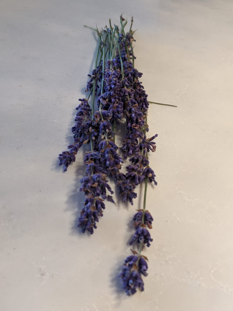 How to Harvest and Dry Lavender for Cooking